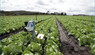 Pontificia Academia para la Vida, la FAO, Microsoft, e IBM: La Inteligencia Artificial en la producción de alimentos