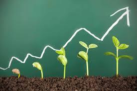 Management e innovación en la empresa actual